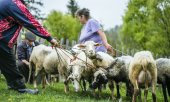 Sheep farming in the Carpathians. (© picture-alliance/dpa)